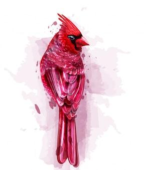 Кардинал красная птица акварель