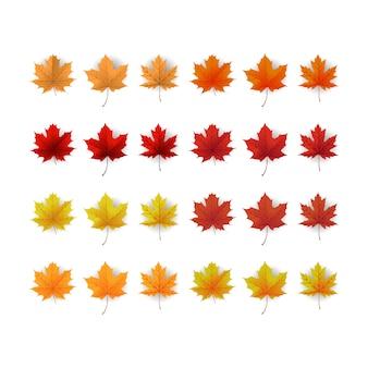 色鮮やかな紅葉のセット。