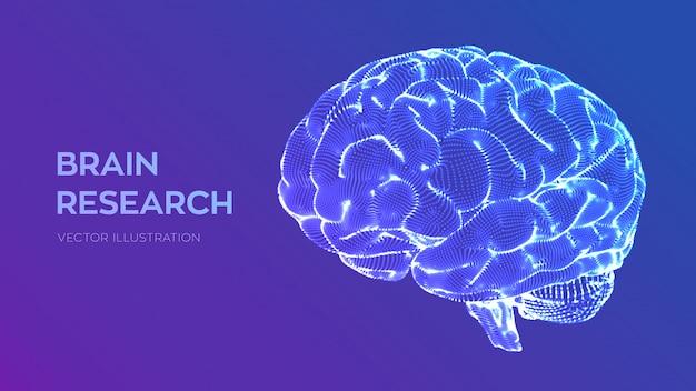 脳。人間の脳の研究