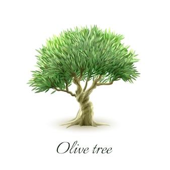 Одиночный рисунок с изображением оливкового дерева