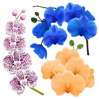 色とりどりの花で蘭の枝