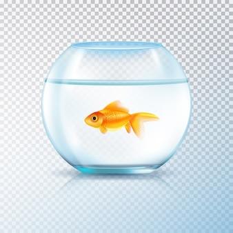 単一の金魚と水族館