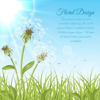 緑色の芝生に白いタンポポ