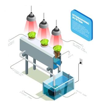 水耕システムのインフォグラフィックレイアウト