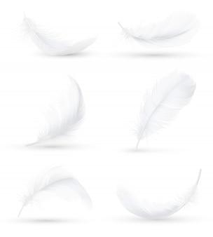 白い羽の現実的なセット