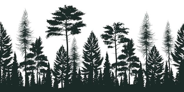 Силуэт соснового леса с маленькими и высокими вечнозелеными деревьями на белом