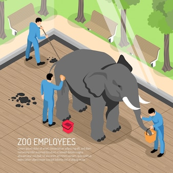 Работники зоопарка с профессиональными инструментами во время кормления и мытья слона и уборки его дома изометрии