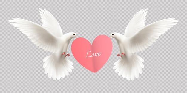Любовь дизайн концепции с двумя белыми голубями держит сердце в клюве на прозрачной реалистичной
