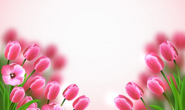 白い背景の美しいピンクのチューリップと母の日色の花の組成