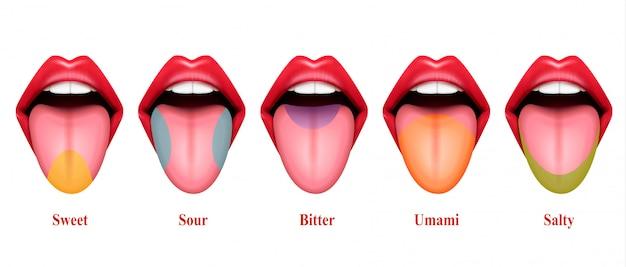 Реалистичные иллюстрации вкусовых оттенков языка с пятью основными частями вкуса: сладкий, соленый, кислый и горький