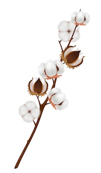 Цветная и реалистичная хлопковая цветочная композиция с созревшим урожаем на коричневой ветке