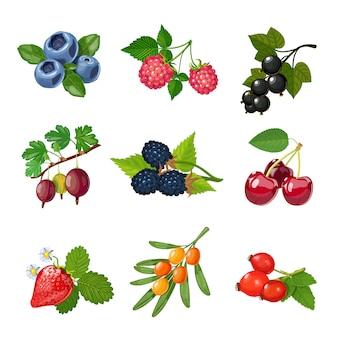木々や低木の果実セット