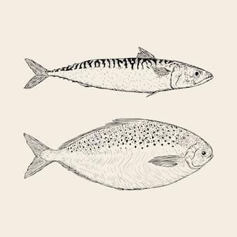 Рисованной рыбы премиум векторные иллюстрации