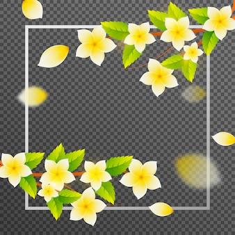 Цветы франжипани украшены на прозрачном фоне