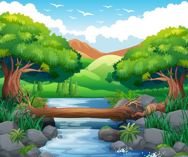 森の中の川のある風景