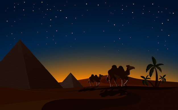 砂漠の夜景のピラミッドとラクダ