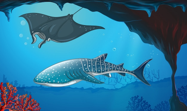 水中で泳ぐサメとスティングレイ