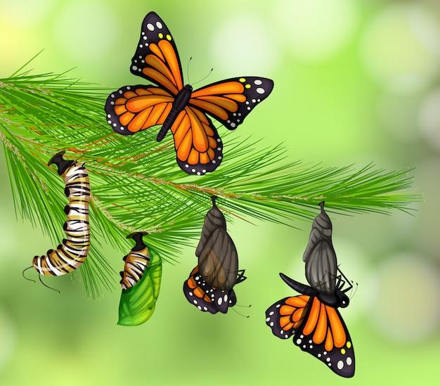 蝶のライフサイクルのセット