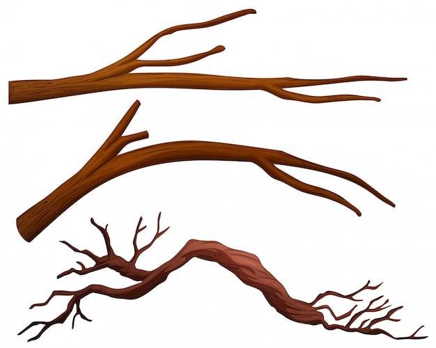 Набор ветвей дерева