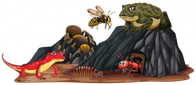 自然の爬虫類と昆虫