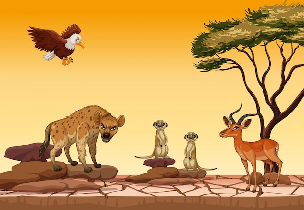 乾燥林の野生動物