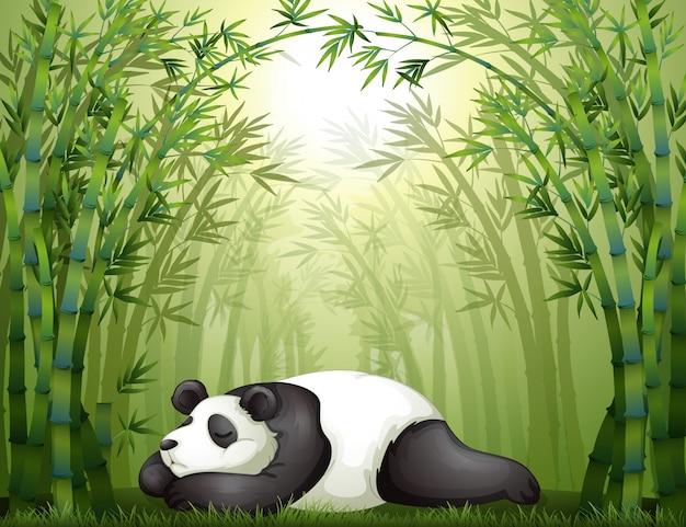 竹の間に眠るパンダ