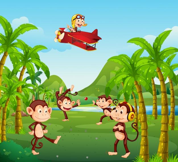 ジャングルのサルのグループ