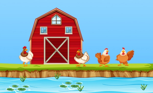 農場での鶏