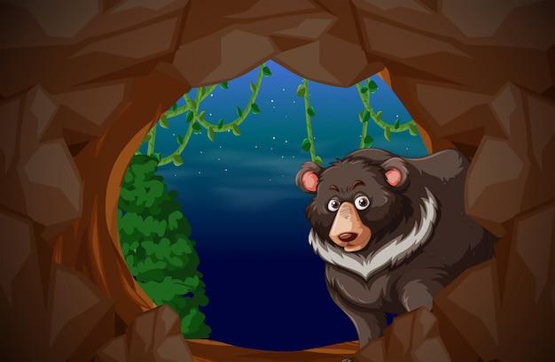 洞穴に住むクマ