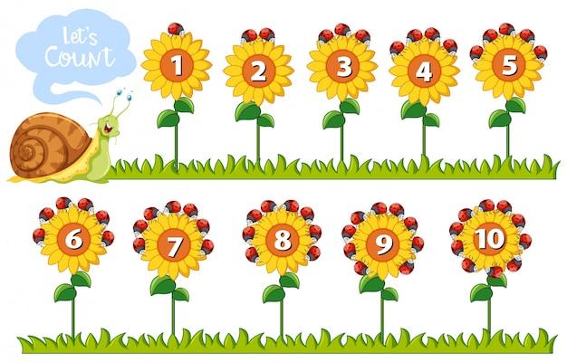 花の数学の数