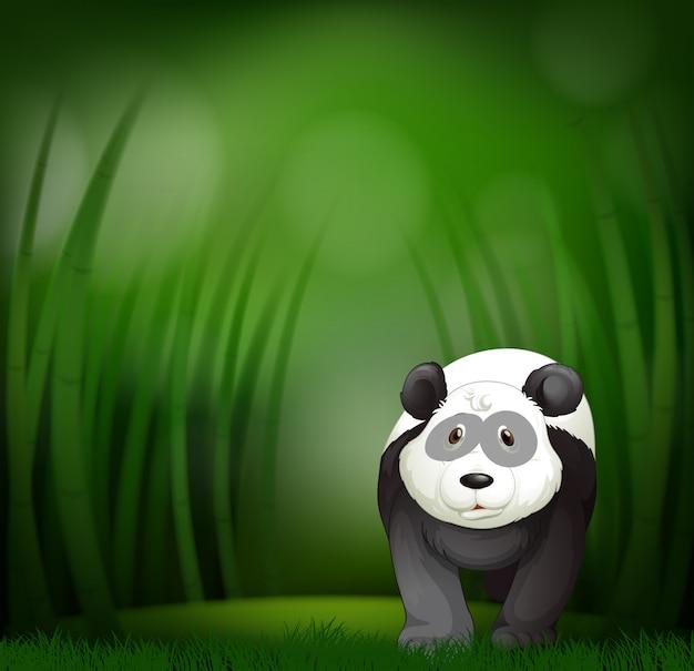 緑の竹の背景にパンダ