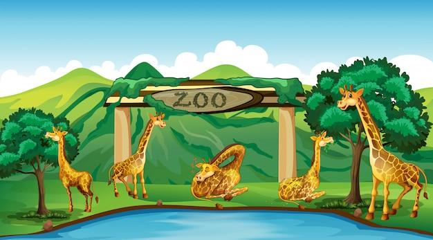 動物園でのキリン