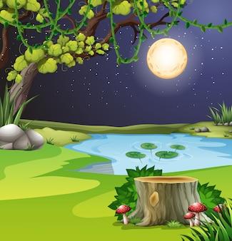 夜の森の風景