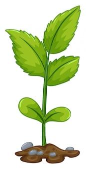 緑の植物が地下から成長