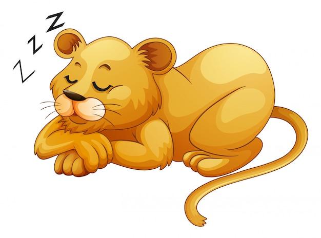 単独で眠っているかわいいライオン