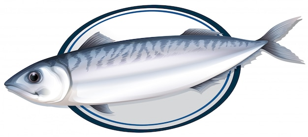 プレート上のイワシ魚