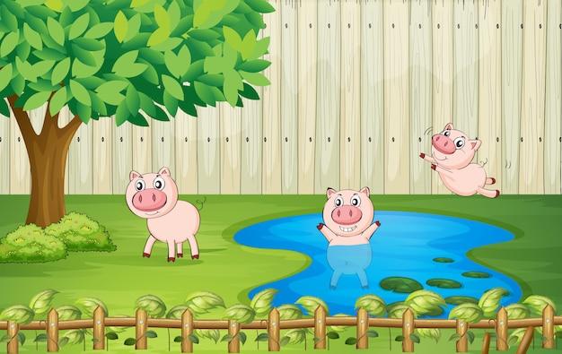 Свиньи на заднем дворе