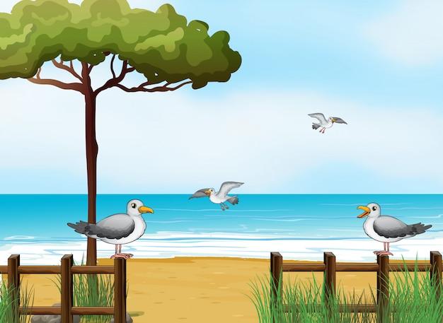 ビーチで食べ物を探している鳥