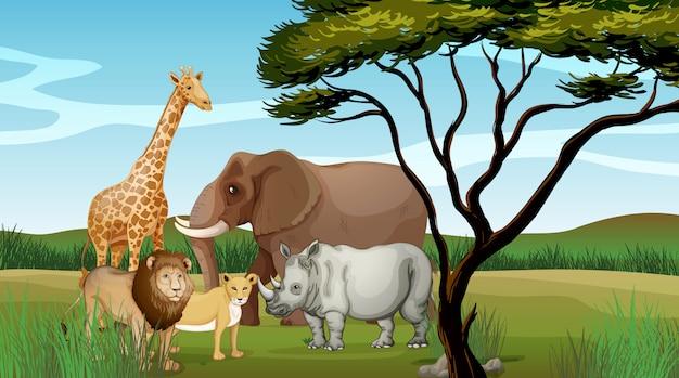 Страшные животные в джунглях