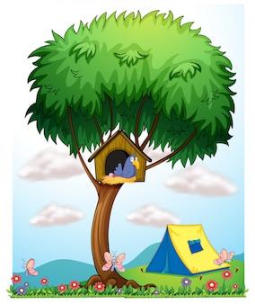 テントの近くの木の上の犬舎