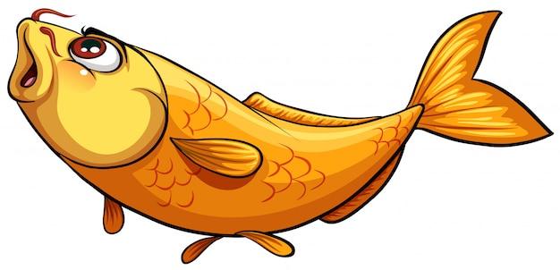 黄色の大きな魚