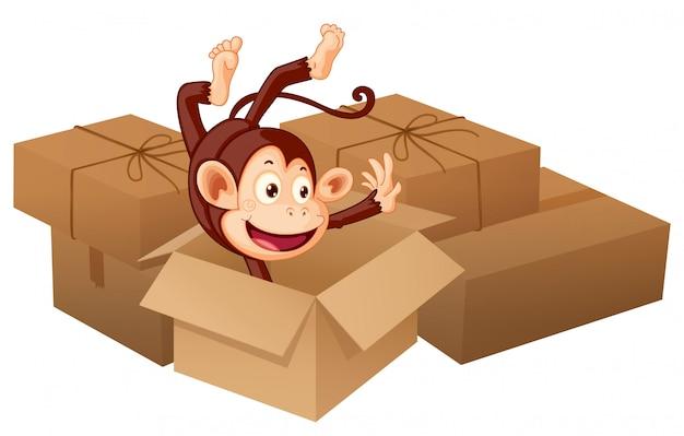 Улыбающаяся обезьяна и ящики