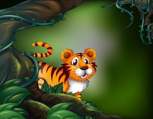 虎と熱帯雨林