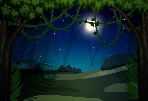 森の暗い夜