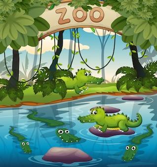 動物園のワニ