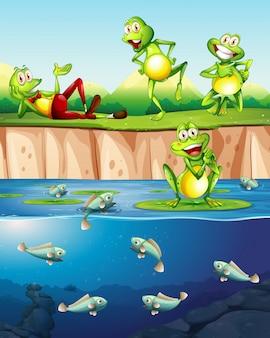 池の隣のカエル