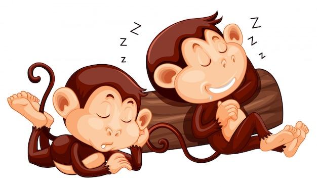 Две обезьяны спали в логе