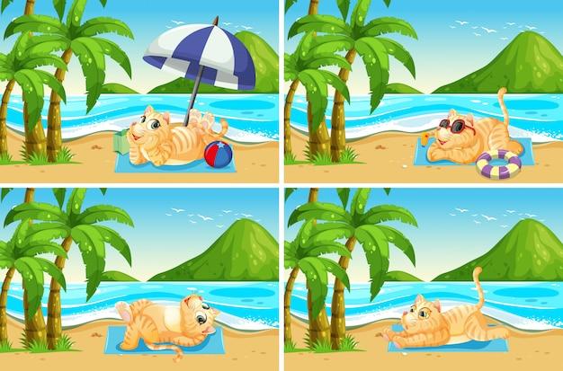 ビーチで猫のセット