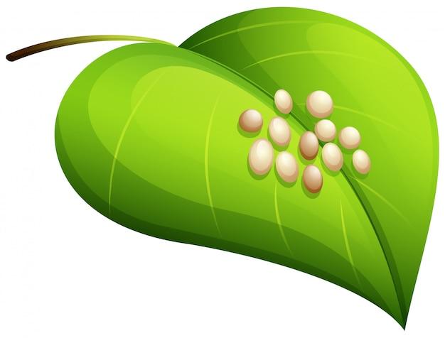 カイコの卵の葉