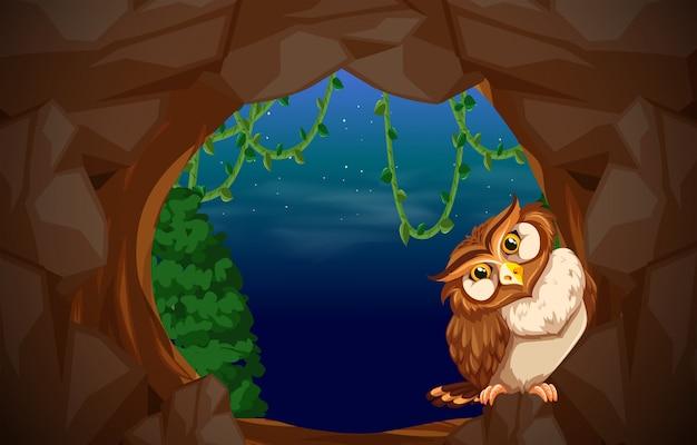 洞穴入り口のフクロウ